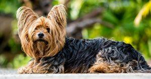 dog taxes case
